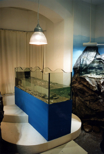 Museo della riserva di Miramare_7