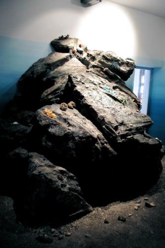 Museo della riserva di Miramare_6